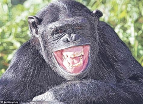 hewan pun bisa tersenyum animal planet