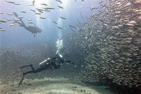 dive package basic dive packages academy bay diving