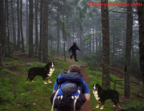 Sighting Of by Possible Bigfoot Seen In Nh New Sighting The Crypto Crew