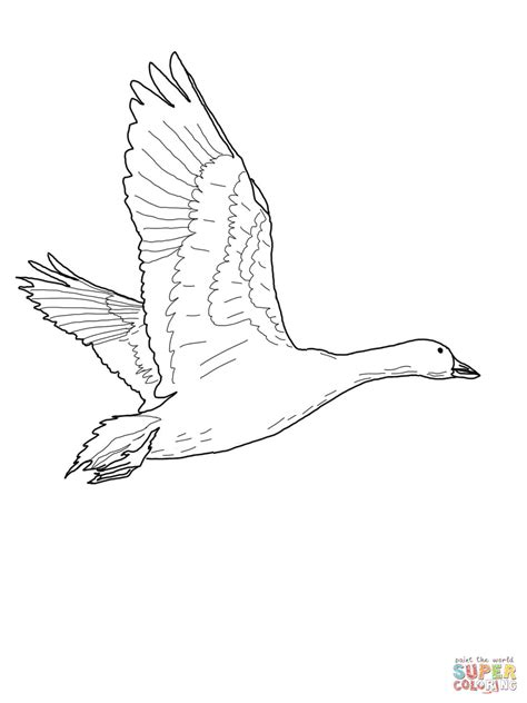 nene bird coloring page nene goose coloring page free printable coloring pages