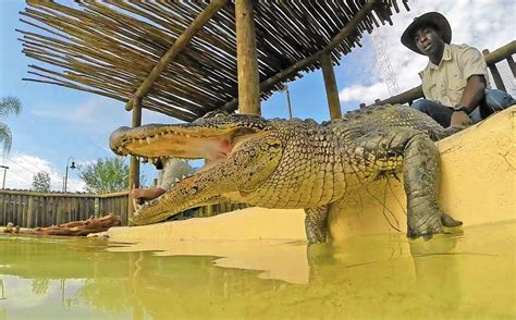 gator spot  smaller gatorland attraction  fun spot america orlando   open