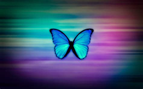 colorful butterfly wallpaper free download colorful butterfly hd wallpapers real artistic