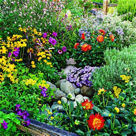 Flowers For Summer Garden - summer flower spring and summer flowers