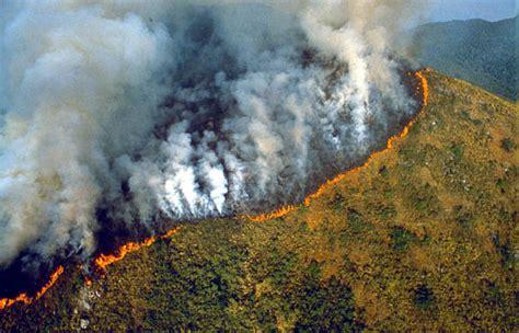 amazon wikipedia indonesia the amazon rainforest deforestation impact
