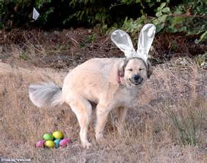 puppy eggs if easter ruled pictures freaking news