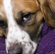 how to remove dog hair from comforter 1000 images about pets resources on pinterest dog