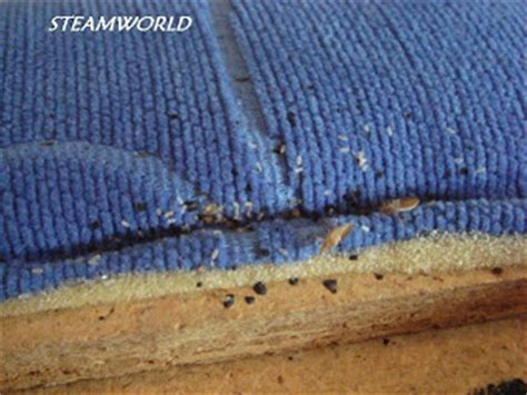 Bed Bugs Headboard by Bed Bug Hotel And Bed Bugs