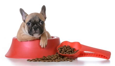 best food for bulldogs best food for bulldogs 7 vet recommended brands