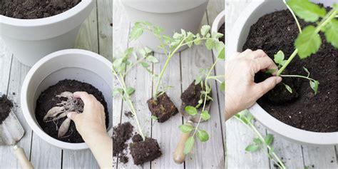 ortaggi in vaso diy ortaggi e fiori in vaso il giardino di veca