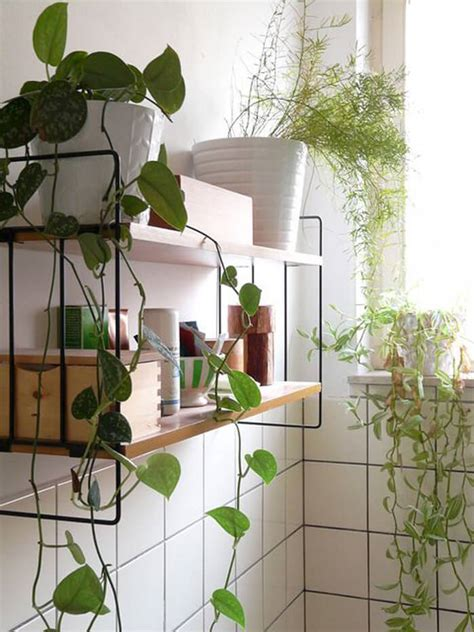 climbing houseplants to grow indoors indoor climbing plants www imgkid com the image kid