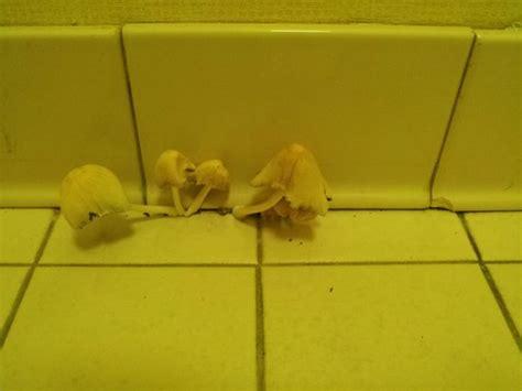 Mushrooms Growing In Bathroom by Mushrooms Growing In Bathroom Picture Of Econo Lodge Inn