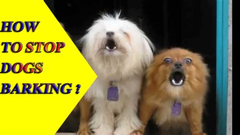 how to keep dog from barking how to stop a dog from barking dogs barking stop dog