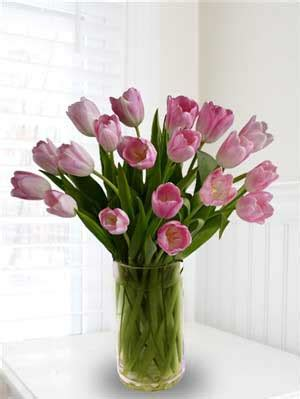 Care For Tulips In Vase by Transparent 20 Pink Tulips In Glass Vase As Gift