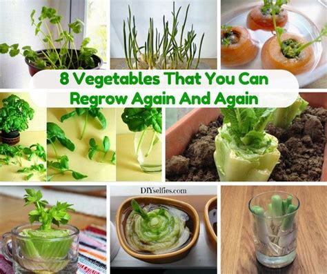 7 vegetables you can regrow 16 best diy s images on home remedies