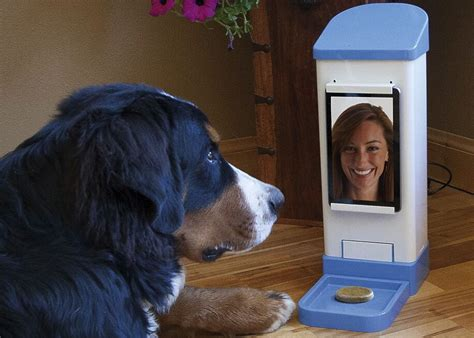 gadgets for pets the best tech and gadgets for your dog uncubed