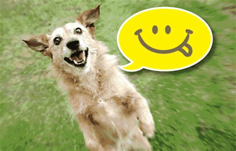 happy puppy gif happy svět šelem všechny šelmy