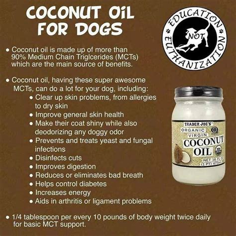 coconut for dogs coat coconut for dogs boquete ning panama