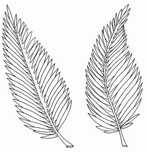palm branch template palm branch coloring page coloring home