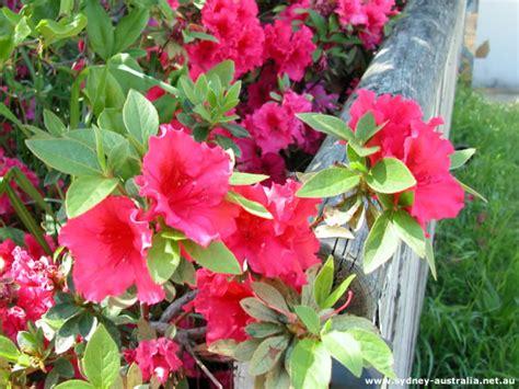 flowers in australian gardens get excellent information for sprucing up your garden
