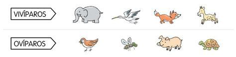 imagenes de animales que nacen del huevo blogs de ana bastida 1 186 y 2 186 191 c 243 mo nacen los animales