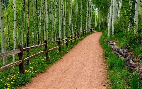beautiful forest path pictures   fun
