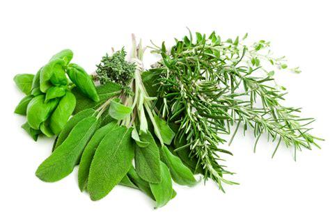 how to store fresh cut herbs skinnytwinkie