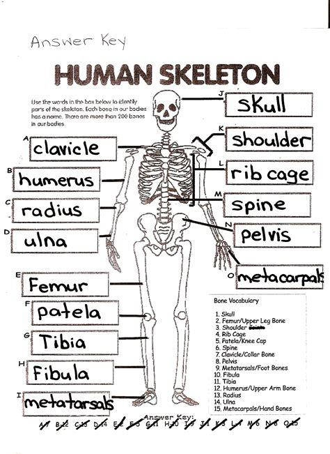 anatomy and physiology coloring workbook answers skeletal activity mckenna mrs home page
