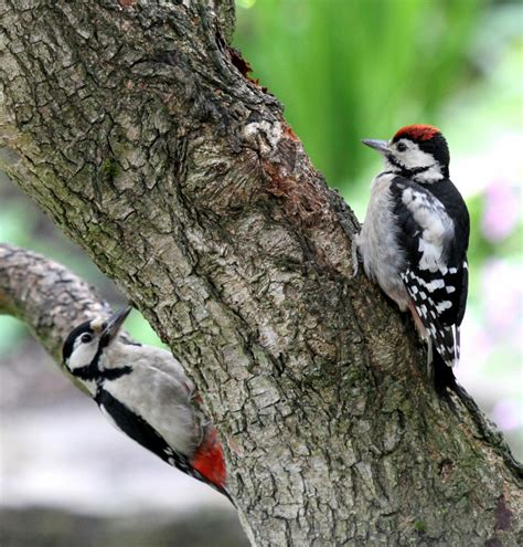 best 28 brown spotted woodpecker birds to see in