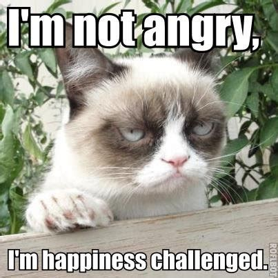 Create A Grumpy Cat Meme - 32 funny angry cat memes for any occasion freemake