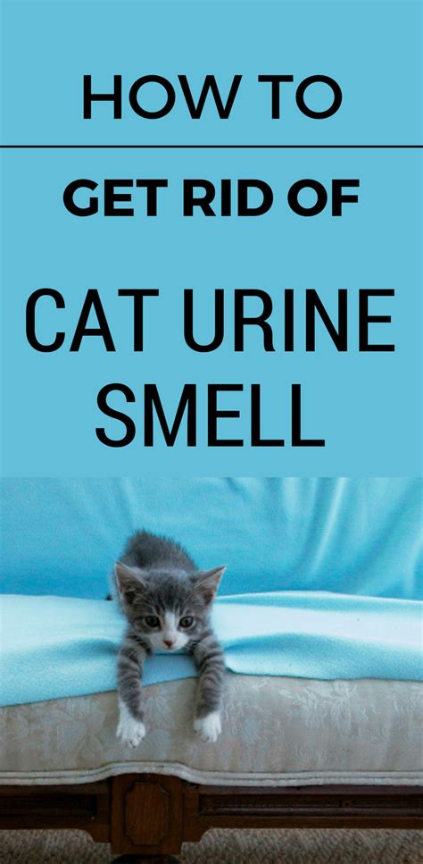 rid  cat urine smell cleaningsolutionscom