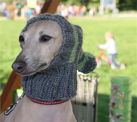 beanies for dogs greyhound hat italian greyhound hat greyhound snood