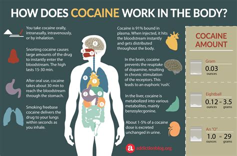 How Do You Detox From Cocaine by Cocaine Metabolism In The How Coke Affects The Brain