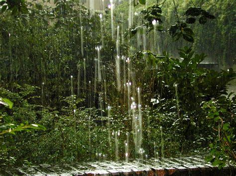 backyard nature image after image rainforrest forrest rain heavy rain rainfall water nature