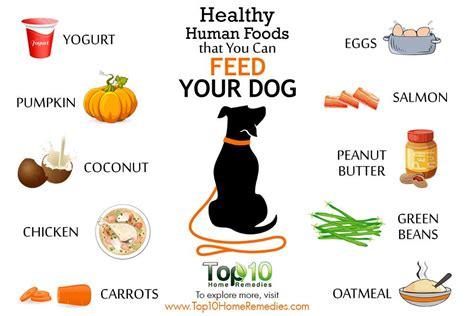 healthy food for dogs 10 healthy human foods that you can feed your top 10 home remedies
