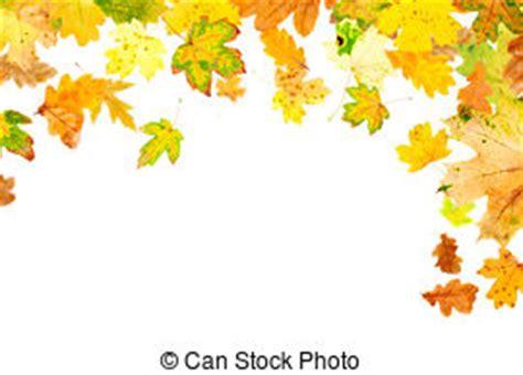 cornici autunno estratto dorato autunno cornice acero immagini e archivi