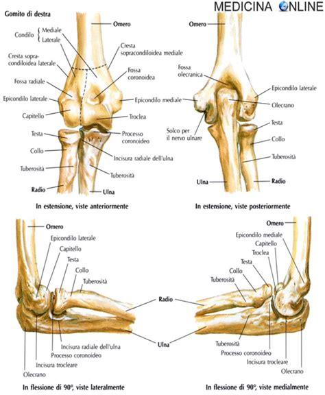 test di anatomia articolazione gomito anatomia e funzioni in sintesi