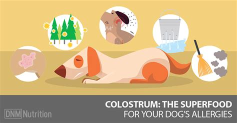 colostrum for dogs colostrum for allergies dogs naturally magazine