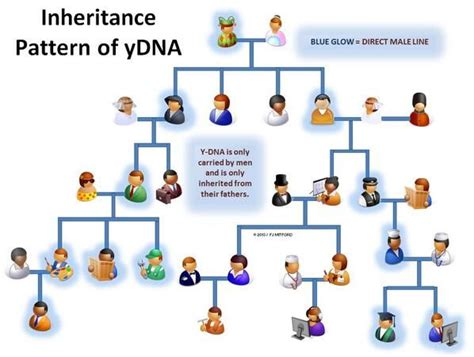 simple pattern of inheritance 63 best images about dna on pinterest africa genealogy