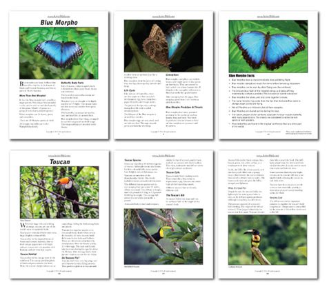 printable rainforest animal cards rainforest animals printable facts pack from active wild