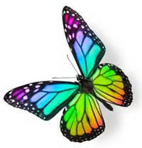 Front Yard Flowers - google images butterfly