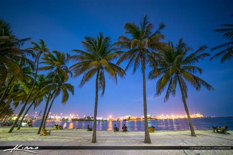 trees in miami miami city downtown bayshore park coconut trees