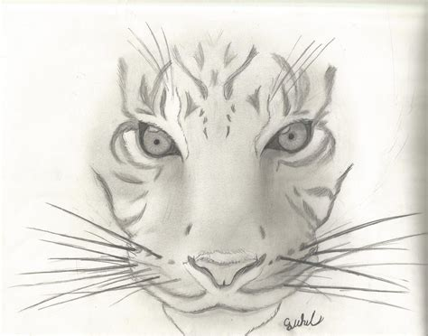 Sketches To Do by Amazing Easy Sketches Gallery Amazing Drawings Easy