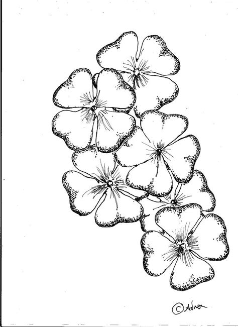sketchbook clover how to draw worksheets for search