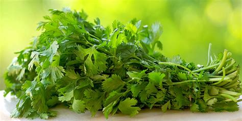 Cilantro Tea Detox by How To Clear Up Your Skin With Parsley Tea