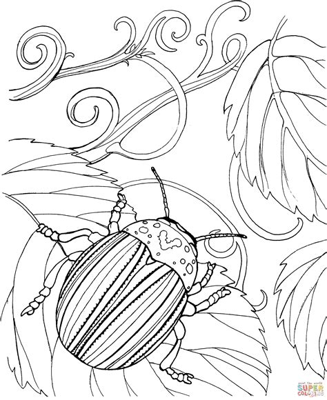 japanese beetle coloring page japanese beetle coloring online super coloring