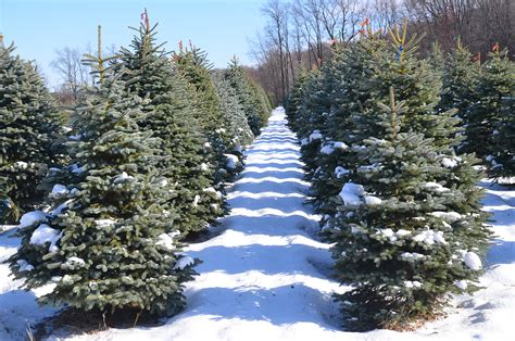 services treetop acres christmas trees
