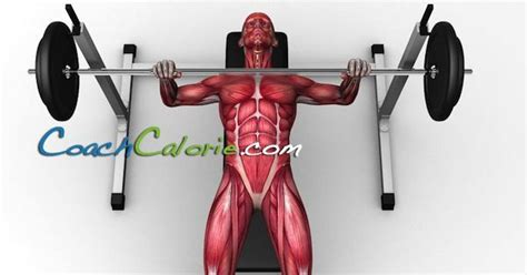 muscle media bench the 3 best exercises to build muscle exercise science