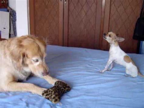 imagenes de videos chistosos perros chistosos cantando youtube