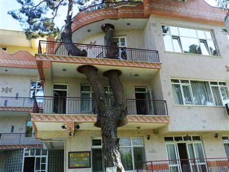 when was the house built 12 architects who build houses around trees instead of cutting them
