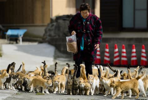 japan s aoshima island cats outnumber humans six to one cat island cats outnumber people six to one on the